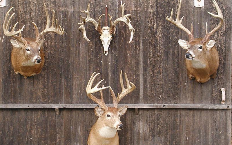 Bucks-on-the-Barn-001
