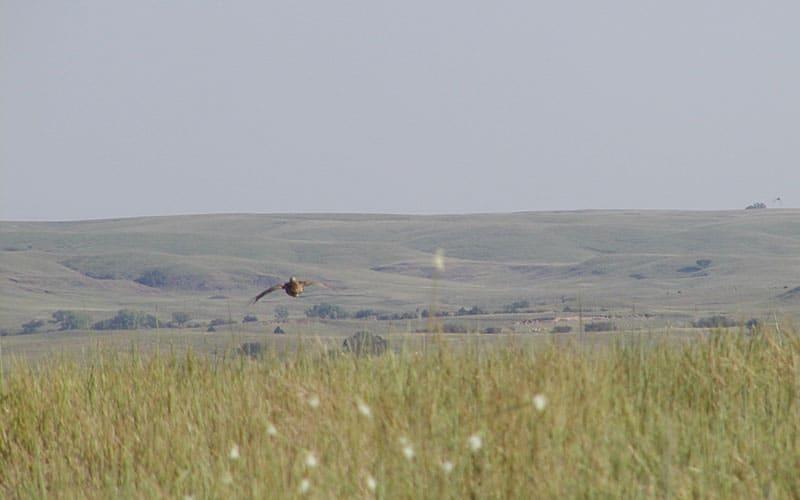 LPC-in-flight