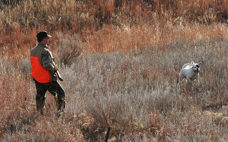 Scenic-and-Quail-Hunt-Photos-043