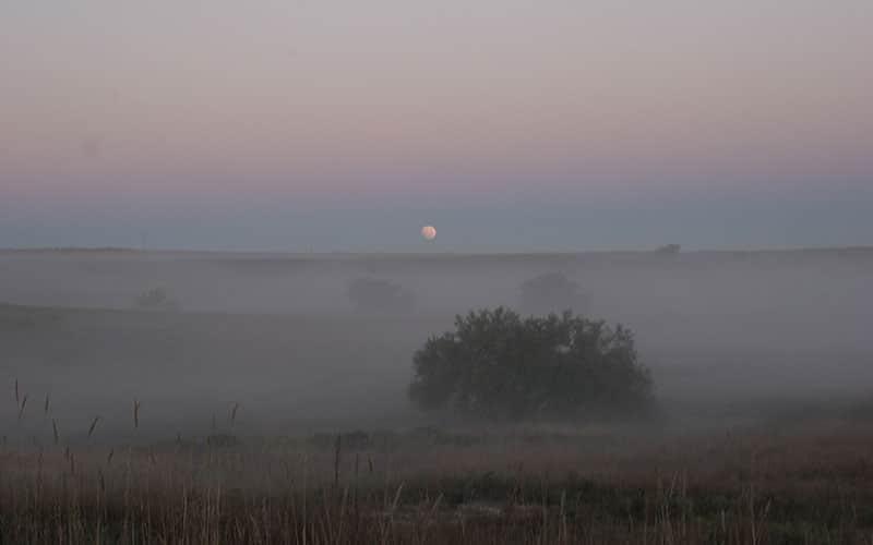 foggy-quail-hunt