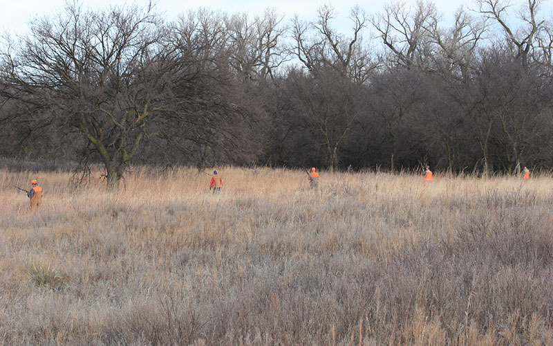 hunters-on-quail-hunt