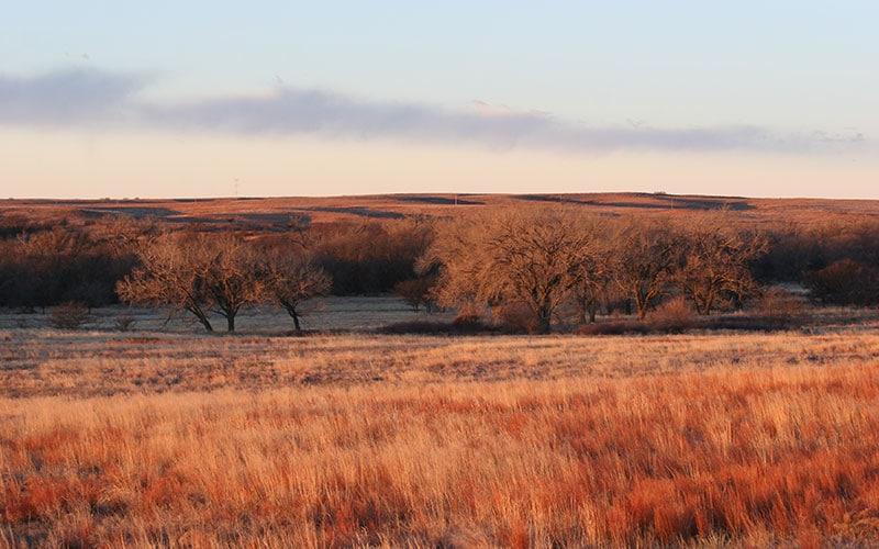 scenic-quail-hunt